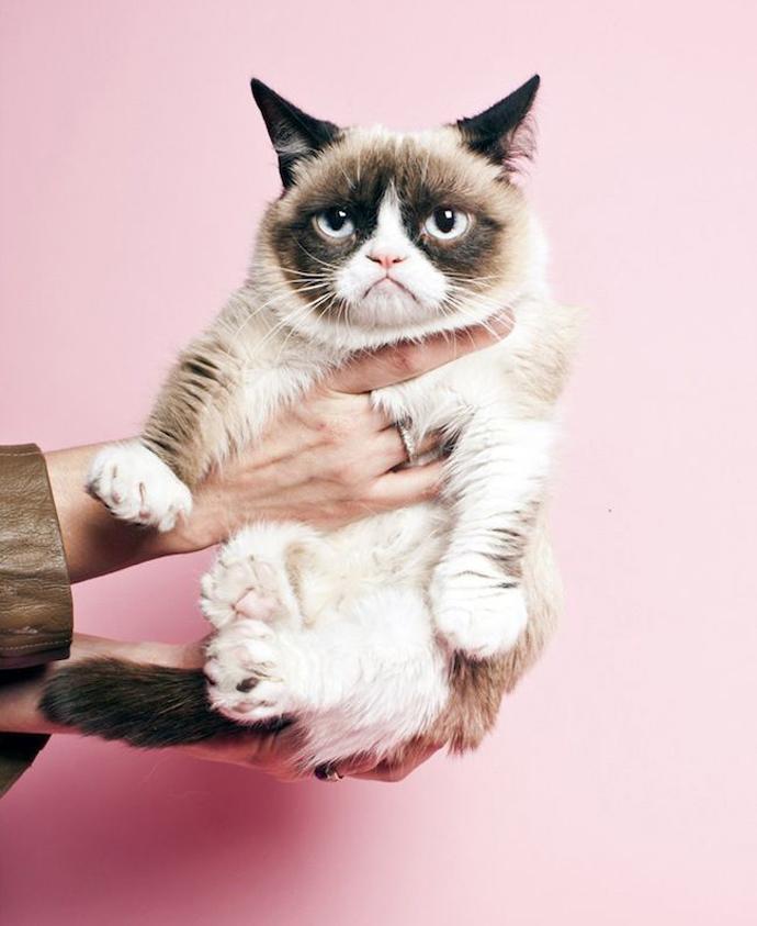 grumpy_cat_01