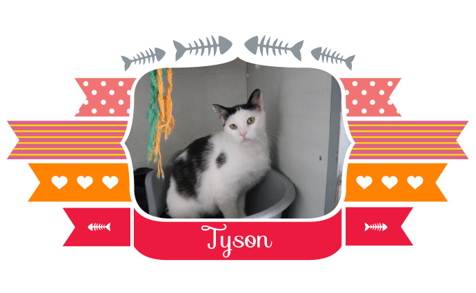 Tyson_Lucy_catootje3