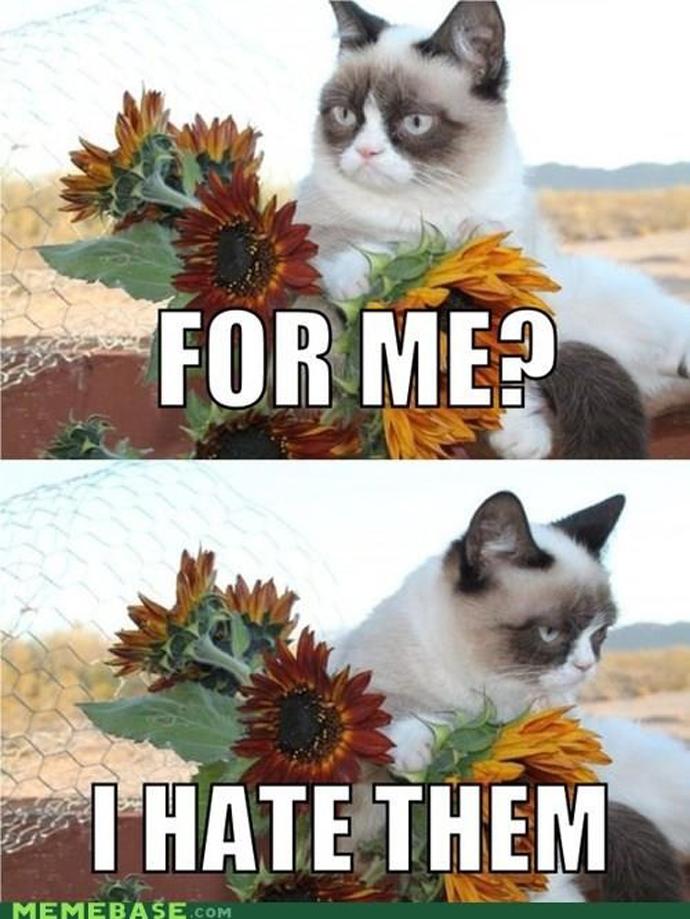 grumpy_flowers
