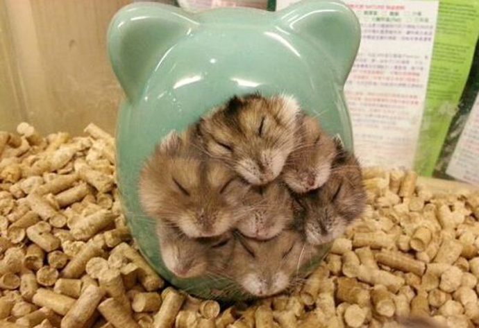 hamsterfamilie