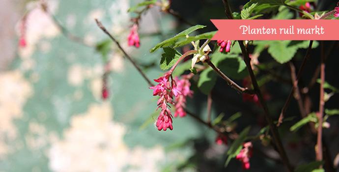 Vrijmarkt - planten & boeken ruilen / Tuin in de stad