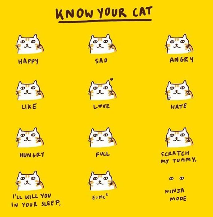 knowyourcat