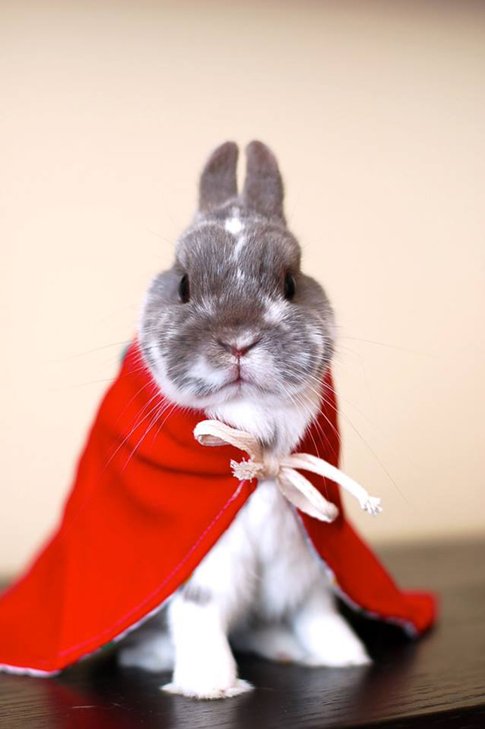 bunny_cape