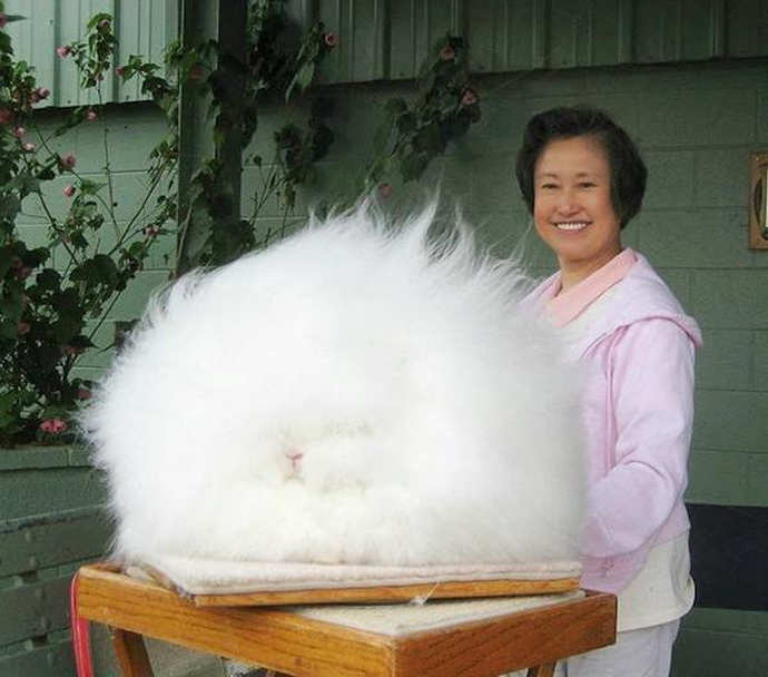 fluffiest bunny