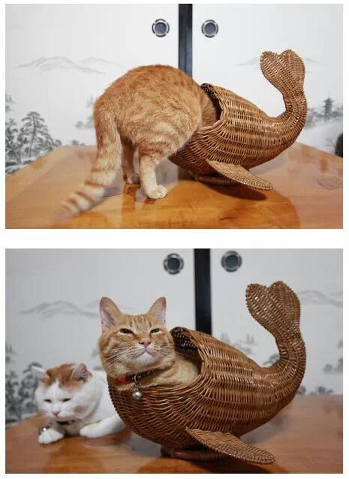 zeemeerkat