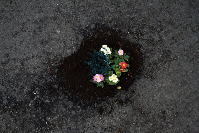 Pothole-Gardens-by-Pete-Dungey-above