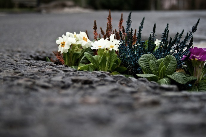 Pothole-Gardens-by-Pete-Dungey-close-up