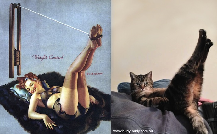 -cats-that-look-like-pin-up-girls-2