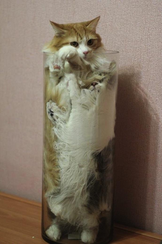 cats vase liquid
