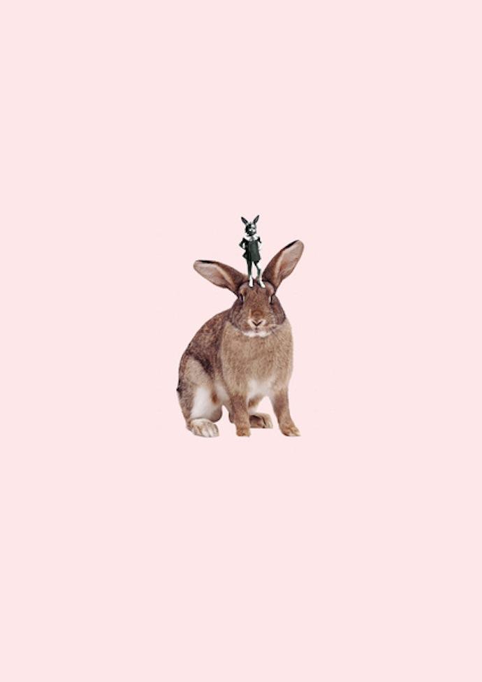 dilok lak bunny