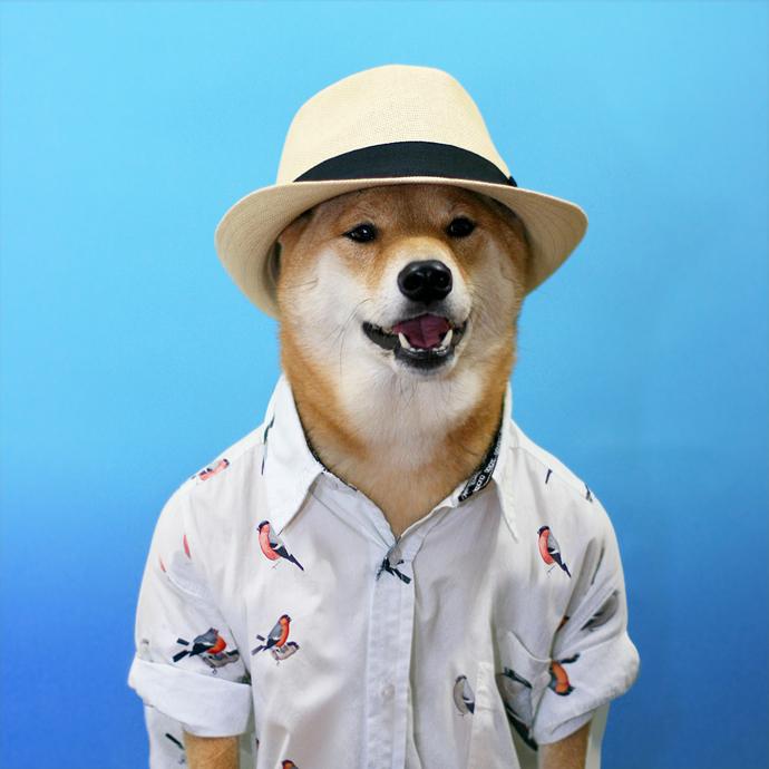 mensweardog12