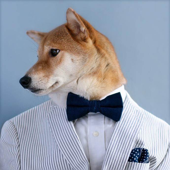 mensweardog16