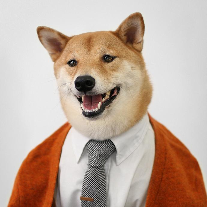 mensweardog9