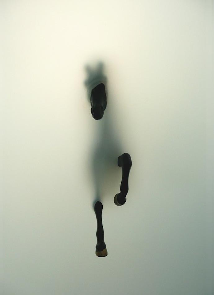 miriam-sweeney-fog-horse