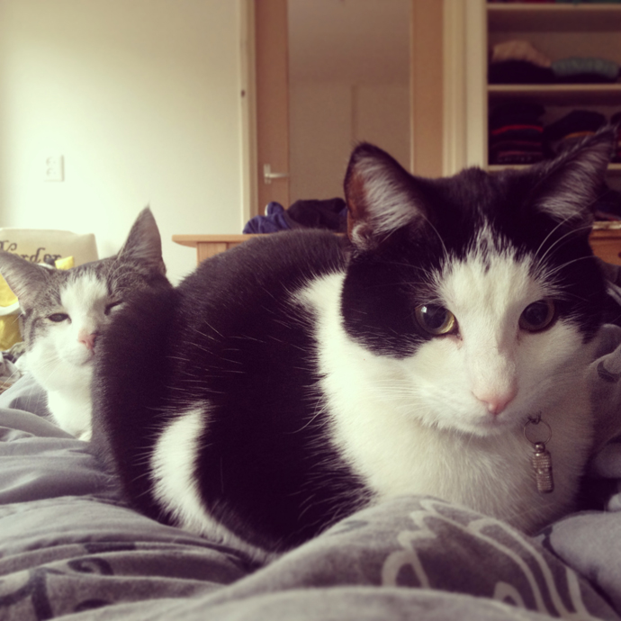 mo_tetkees_cats