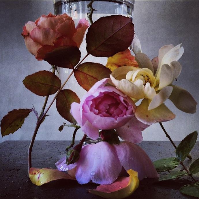 nick-knight-flowers-1