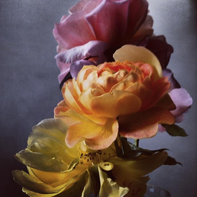 nick-knight-flowers-2
