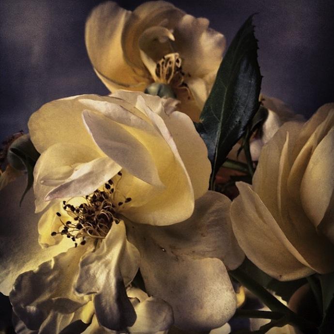 nick-knight-flowers-4