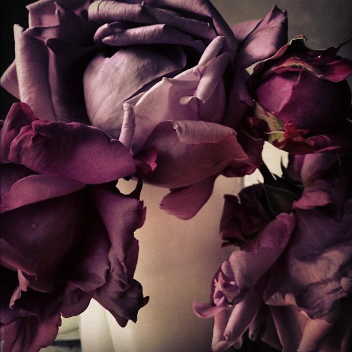 nick-knight-flowers-5