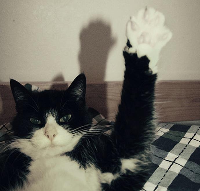 wuddup-cat-paw