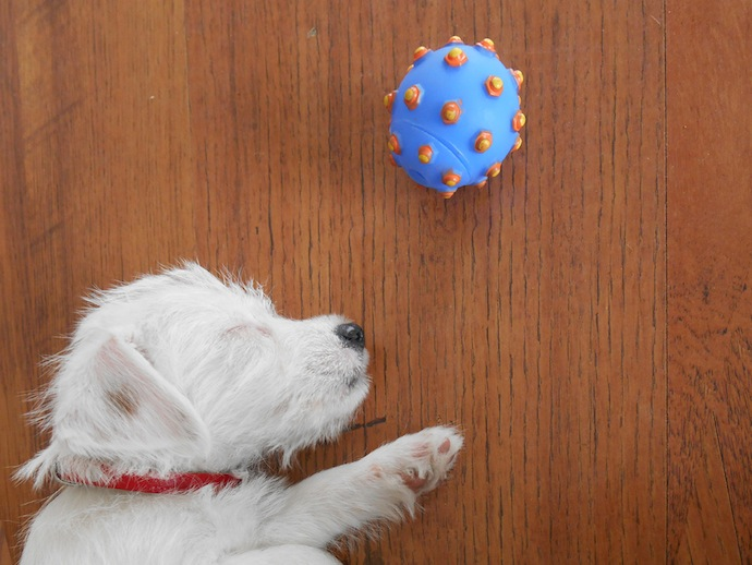 dog-puppy-doortje-1