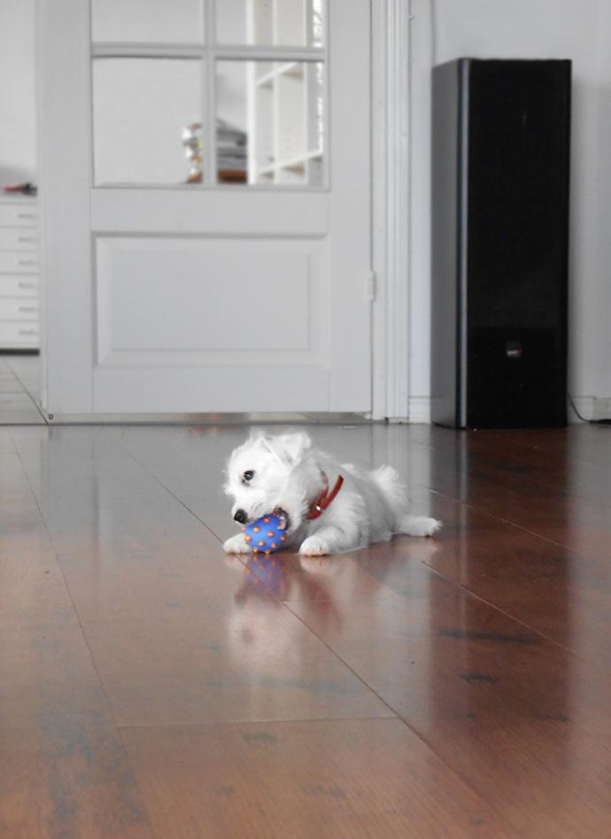 dog-puppy-doortje-16