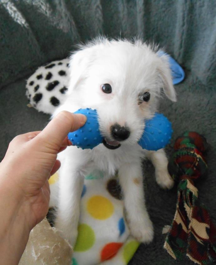 dog-puppy-doortje-17