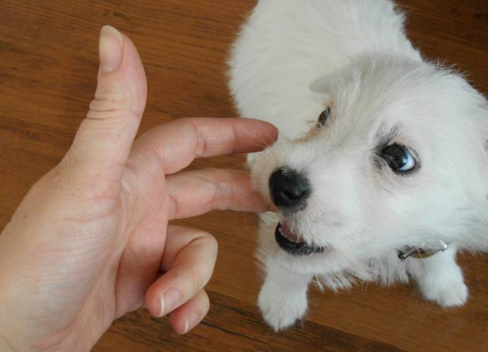 dog-puppy-doortje-20