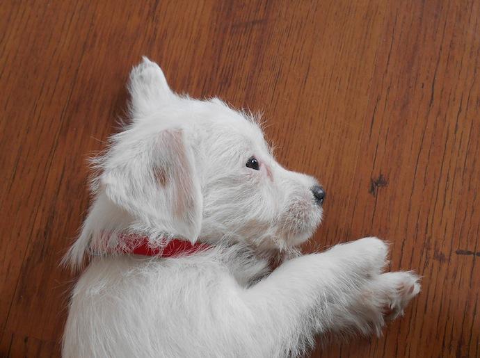 dog-puppy-doortje-3