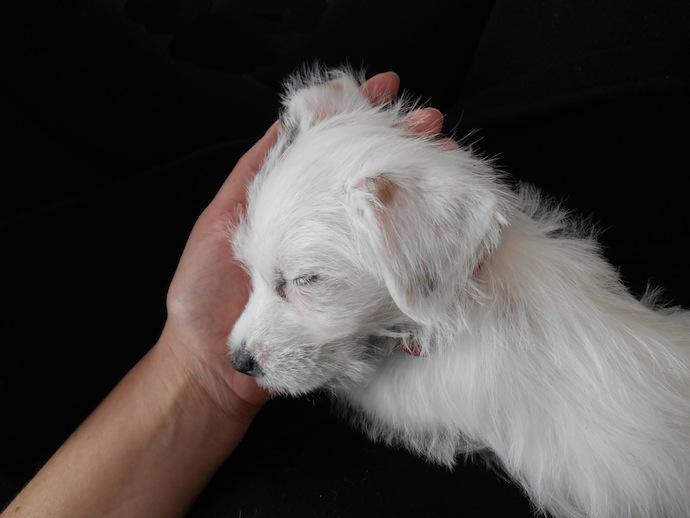 dog-puppy-doortje-4