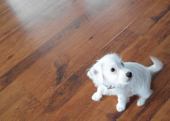 dog-puppy-doortje-7