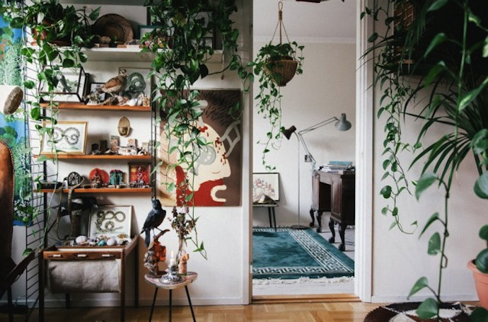 house-plants-Nor-Toma-3