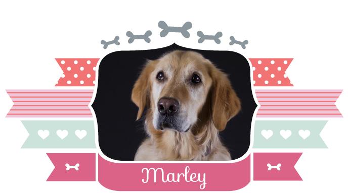 ik_zoek_baas_marley