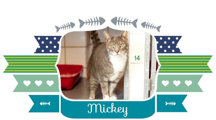 ik_zoek_baas_mickey