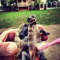 turtle_toothbrush