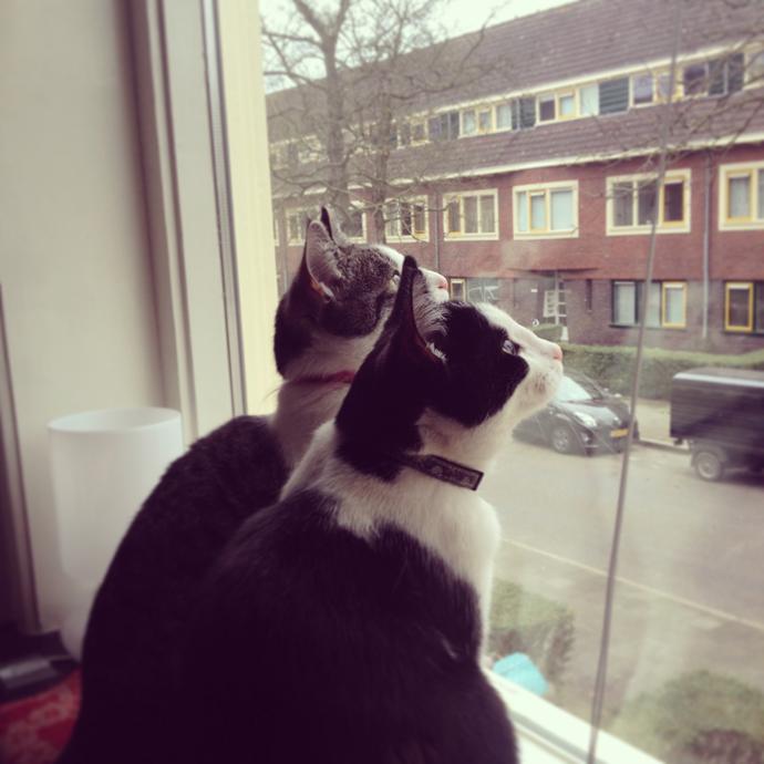 vogeltjes_kijken_kat