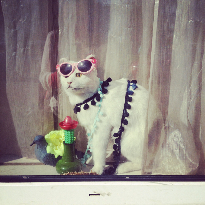 yolo_cat_opgezet_zonnebril