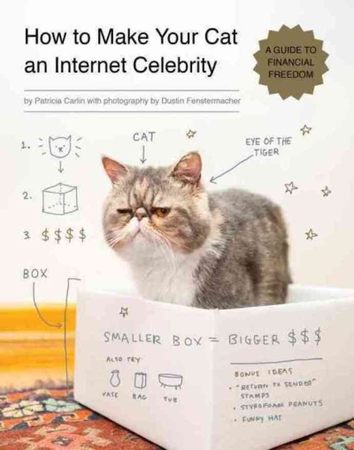 How To Make Your Cat An Internet Celebrity 4