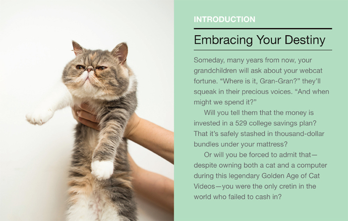 How To Make Your Cat An Internet Celebrity 8