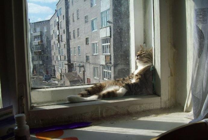 Window lounging cat