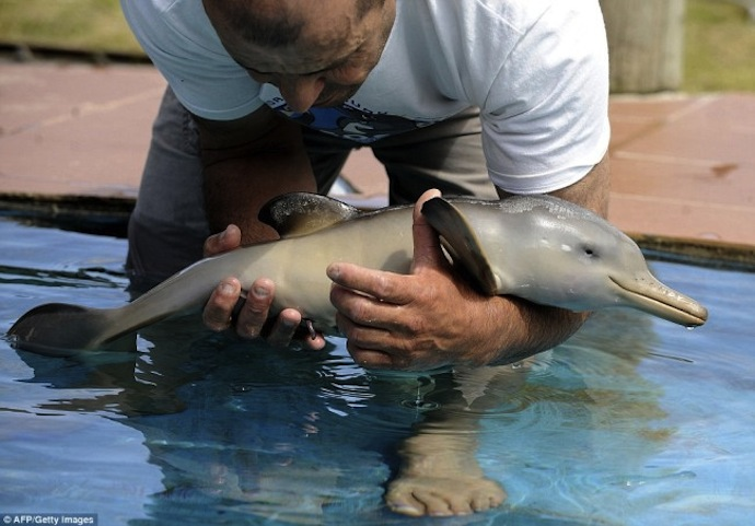 baby-dolphin-3