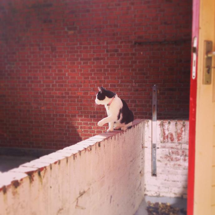 mo balkon