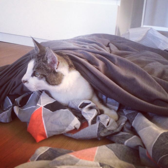 tetkees kat beddengoed