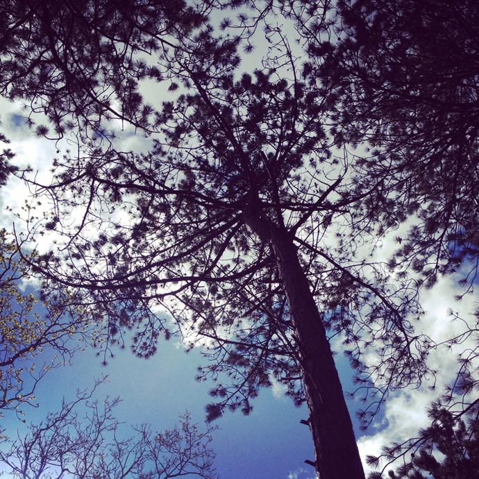 bomen kijken in het bos