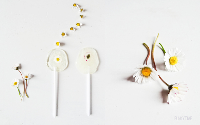 daisy lollipops 3