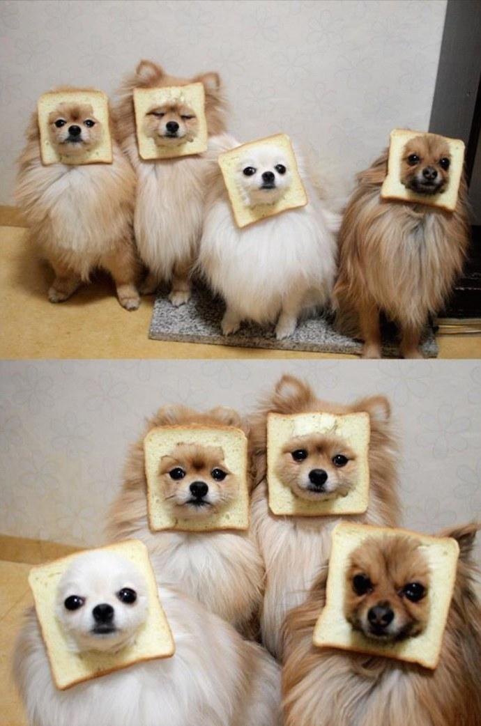 dog sandwich