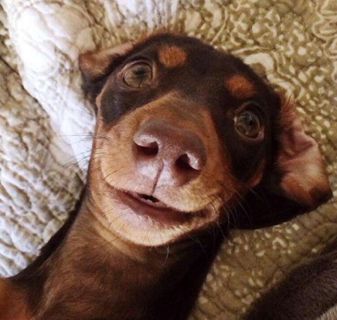 harlow-sage-dogs-selfie-3