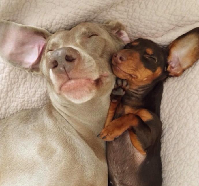 harlow-sage-dogs-selfie-4