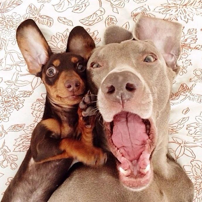 harlow-sage-dogs-selfie-9