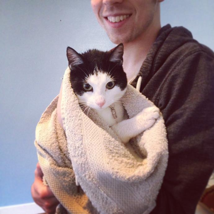 mo cat towel